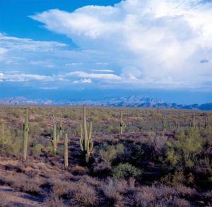 Arizona Desert 10