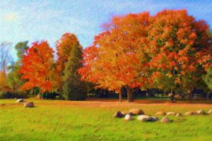 Autumn trees 11