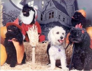 mutiple dogs